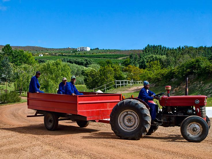 Farm workers are transported around on the back of a tractor at the Hamilton Russel wine vineyards near Hermanus.