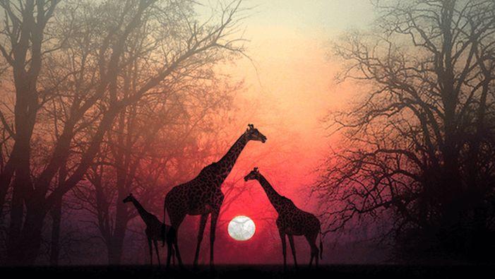 Δώσε χρόνο στην ψυχή σου να σε φτάσει: Μια όμορφη αφρικανική ιστορία - Αφύπνιση Συνείδησης
