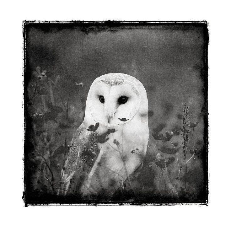 Owl art printable black and white gothic wall decor chaos wonder design
