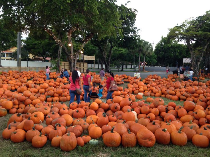 Pumpkin Patch Miami Lakes Oct 2014