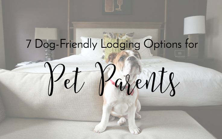 If you enjoy traveling with your pet and you're looking for dog-friendly lodging options, check out these 7 pet-friendly options.