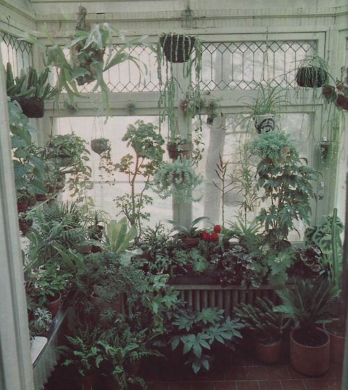 My house will look like this by the summer. You can never have too many plants around.