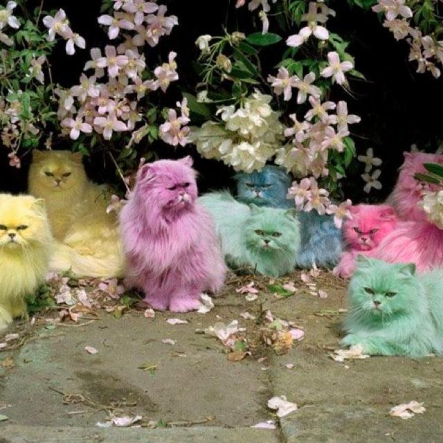 World is wonderful n colorful