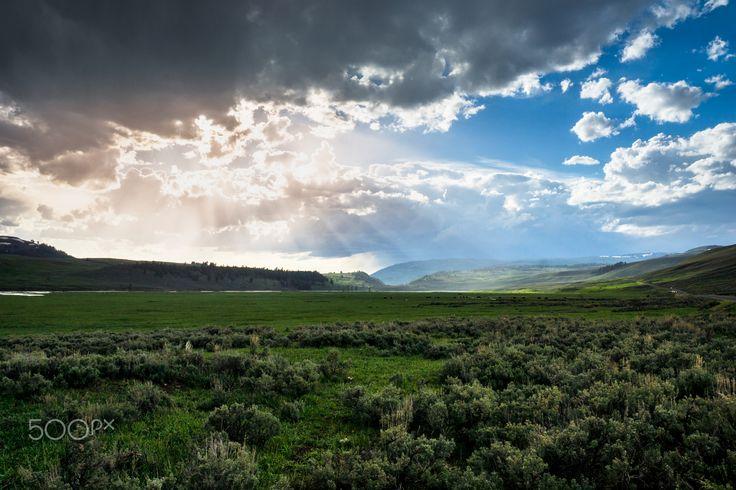 Lamar valley in yellowstone -
