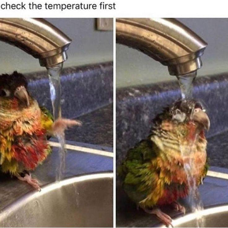 So precious Other Accounts: @didyouknowgamingfacts @bestofgamingmemes Featured.memes Sherry Miller.swap – #bird #birds #birb #birbs