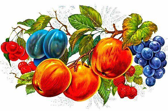 Схема вышивки «фрукты» - Схемы