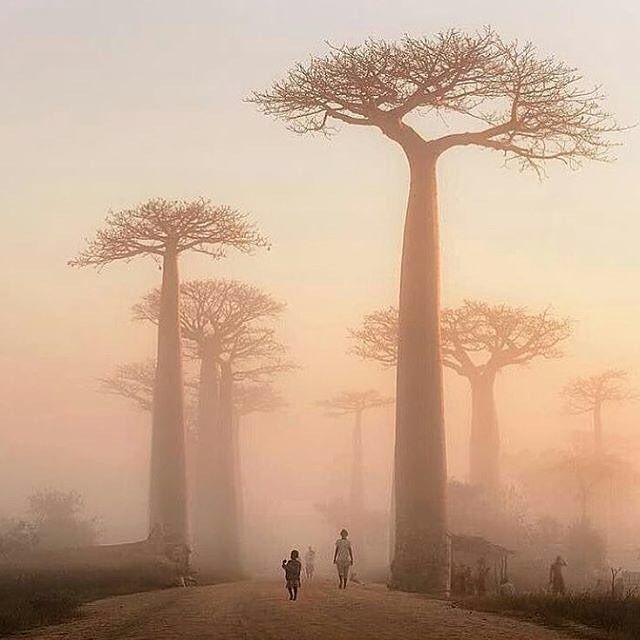 Village near baobab alley in Madagascar PC: Bogdan Comenescu