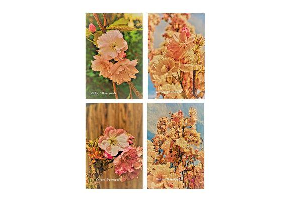4 x Shabby Chic Cherry Blossom Art Photographs by OxfordDownloads