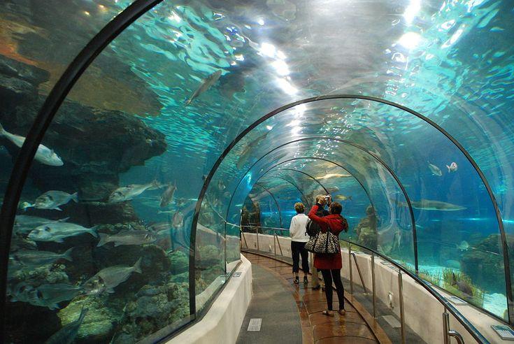 Sementara itu, 70 staf Underwater World Singapore mengatakan kepada Channel News Asia bahwa mereka akan mendapat kompensasi sesuai dengan Undang-Undang