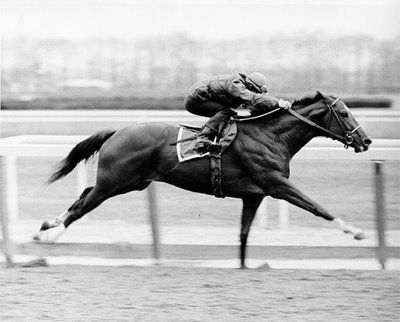 """I saw Secretariat win by 31 lengths at the Belmont (well, not in person) in June 1973, a record in time and distance that still stands today as do many of this horse's other records.  It was like he had an extra gear somewhere and just flew. """"Big Red"""" loved to run and was dubbed as """"a tremendous machine"""" by the sportscaster calling the race.  Check out the 1973 Belmont race on YouTube, and you will be cheering a horse that may never be equaled, much less surpassed."""