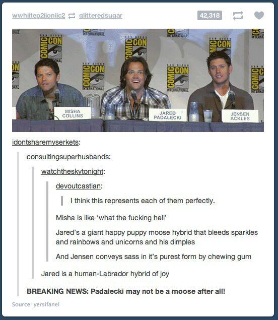 Jared: The moose/human Labrador hybrid of joy