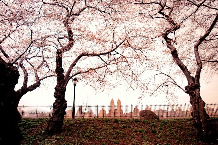 After seeing just one magical photo of Central Park in the winter (see above composite by Stephen Wilkes), we felt compelled to put together this list of 20 of the most breathtaking photos of the world's most famous park. Though it officially opened in 1857, it was a year later that landscape designer Frederick Law Olmsted and architect Calvert Vaux beat out 32 entries to win a landscape design contest that would transform the park. They called their project the Greensward Plan. As you may…