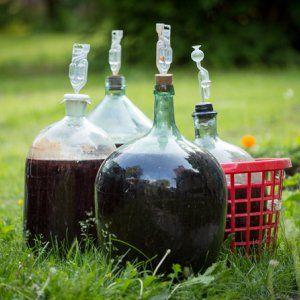 : Домашнее вино
