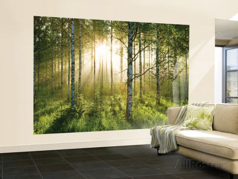 Birkenwald In Der Morgensonne Fototapete