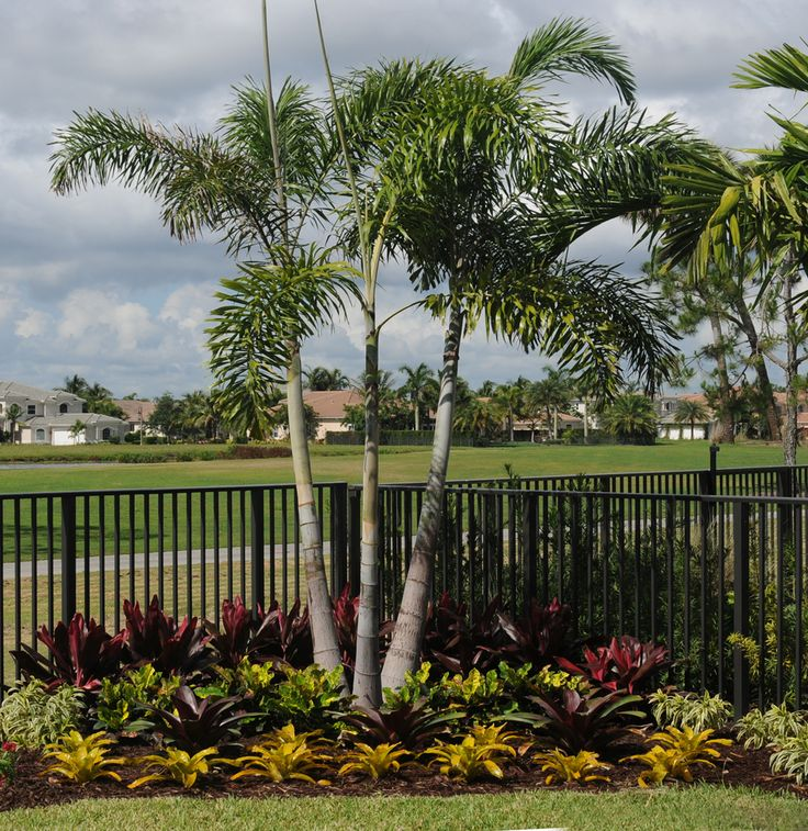 South Florida Tropical Landscape Ideas Planter Container: 17 Best Images About South Florida Landscaping On
