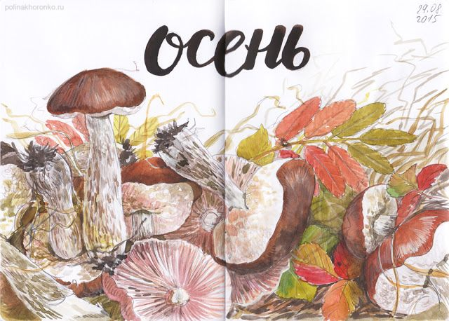 #sketchbook by Polina Khoronko: Скетчбук 2015 #watercolor #mushrooms #autumn #foodillustration