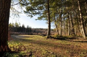 9958 Serendipity Road Powell River BC – Beautiful private 33 acre parcel with large creek running through it a great place to get away from it all. The north area above the power line is approximately 25 acres with approximately 3 acres in easement for hydro. There is approximately 7 acres on south side which is accessed off end of Serendipity Road.  Features include loads of great soil for gardening, lots of trees for building your own log cabin, and great south sun exposure.