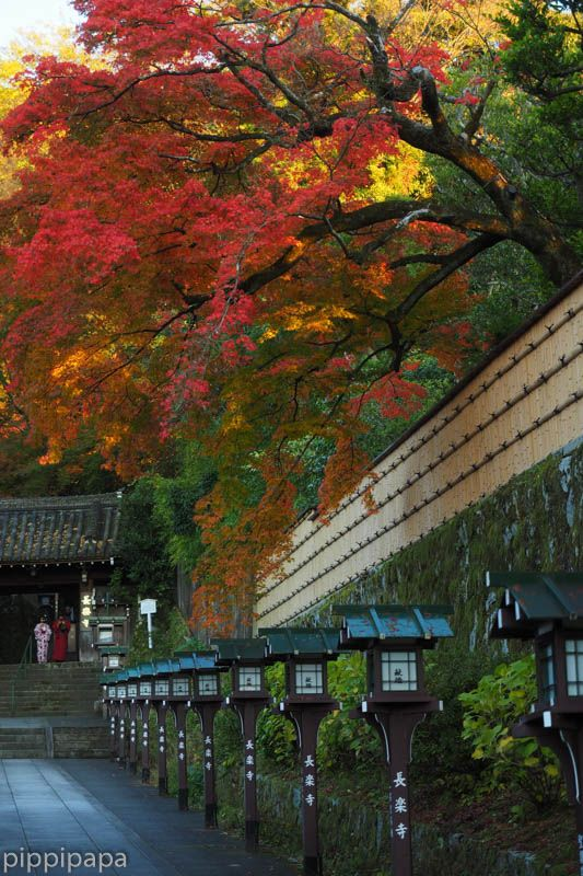 Choraku-ji temple, Kyoto, Japan 長楽寺の紅葉