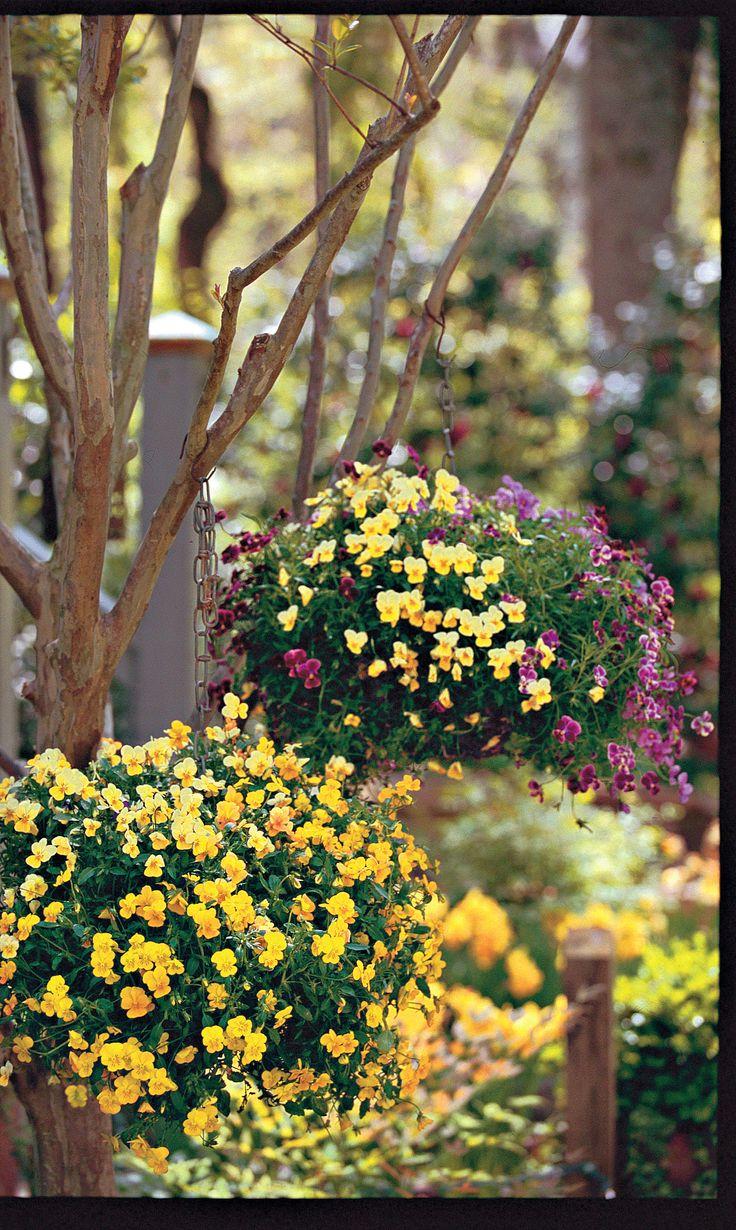 22 Ways to Use Pansies & Violas in Containers Pansies