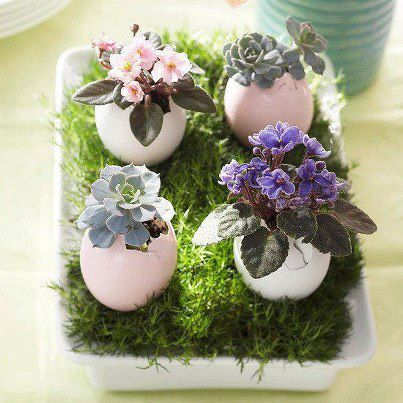 Repurposing eggshells into a miniature garden
