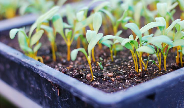 Seed Starting Indoors - Read our guide to getting your garden started!
