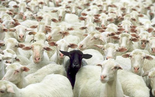 There is always one.... and you know who it is ; )Goats, Middle Schools, Inspiration, Funny Pics, Individual, Quotes, Blacksheep, Black Sheep, Animal