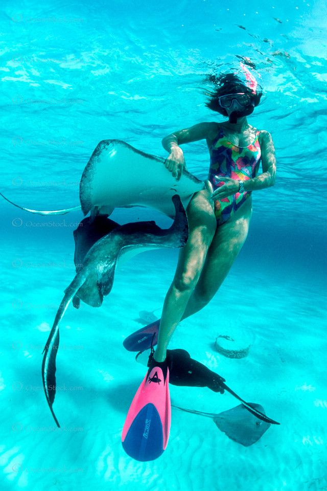 snorkeler and southern stingray, Dasyatis americana, Stingray City, Grand Cayman, Caribbean Sea, Atlantic Ocean