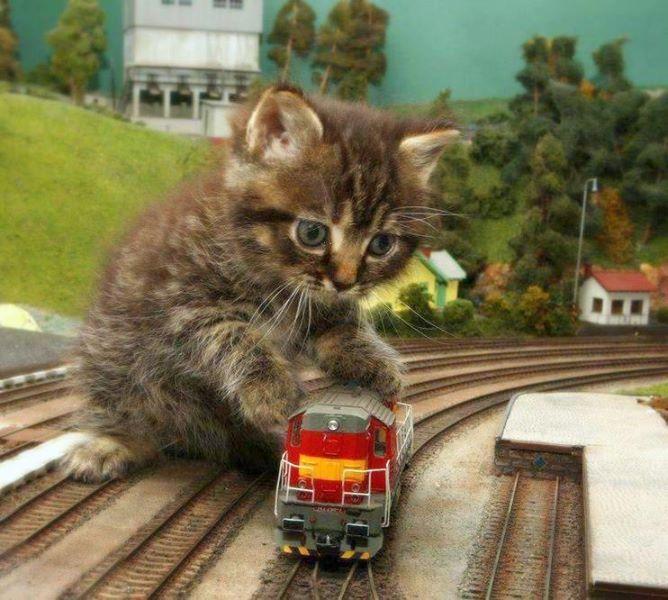 kitten's model train.