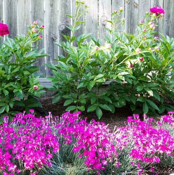 1000 ideas about hardy plants on pinterest indoor flowering plants flowering house plants - Hardy office plants ...