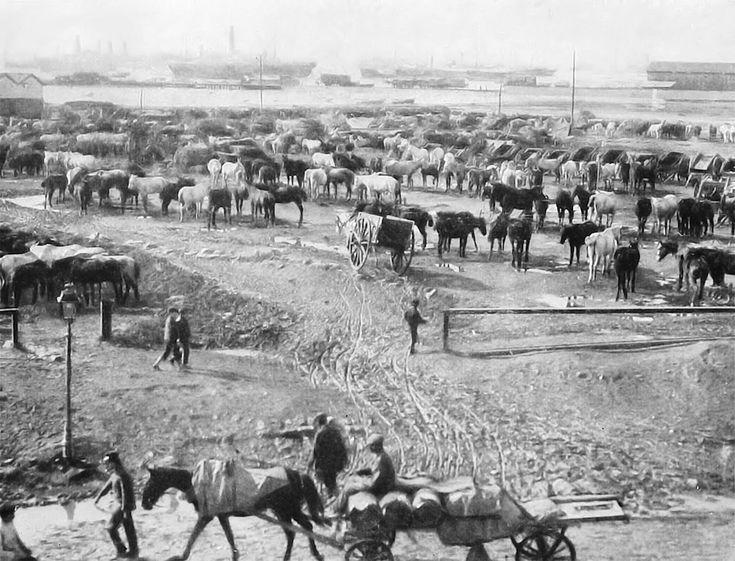 Άλογα του Γαλλικού στρατού στο Λιμάνι το 1916