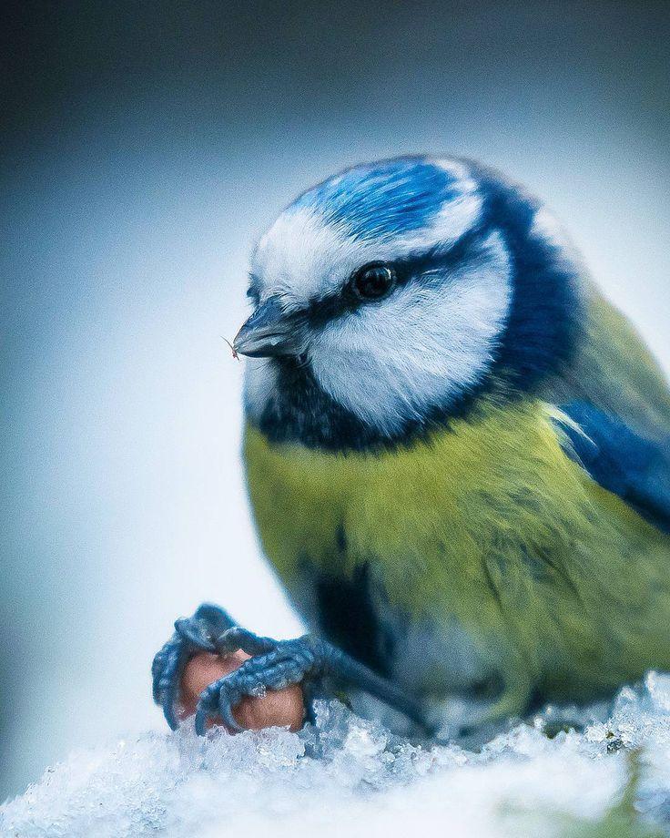 Wildlife Finland: Dreamlike Animal Portraits by Joachim Munter #art #photography #Animal Photography