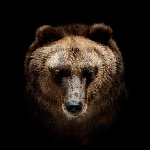 Gezin opgeschrikt door nachtelijk bezoek van een beer in Italië - HLN.be