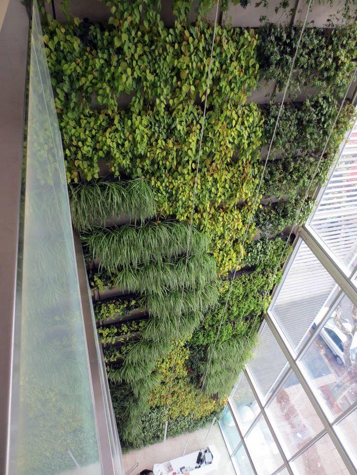 las 25 mejores ideas sobre paredes verdes en pinterest y