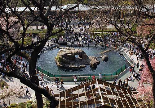 The Central Park Zoo is a small 6.5-acre zoo located on Central Park in New York City. It is part of an integrated system of four zoos and the New York Aquarium managed by the Wildlife Conservation
