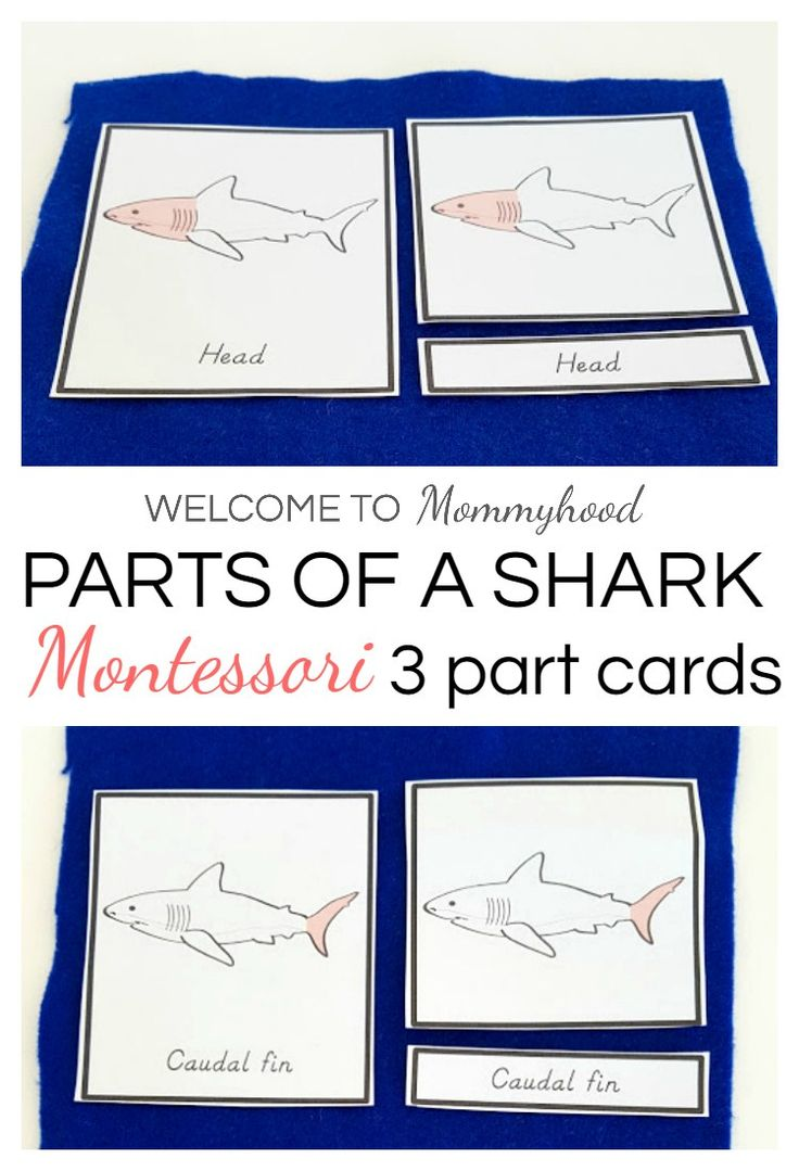 Shark Activities Montessori Parts Of A Printables