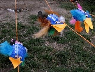 bird races