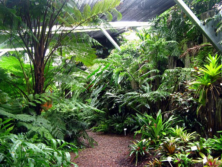 63 best images about fernery ideas on pinterest backyard for Domestic garden ideas