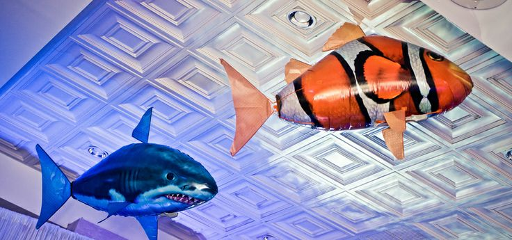 32 best bar bat mitzvah theme under the water images on for Flying fish addison
