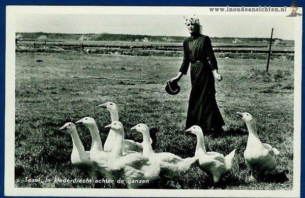 Texel. Vrouw achter de ganzen in Texelse klederdracht.1e wadden eiland behorend bij Noord Holland.