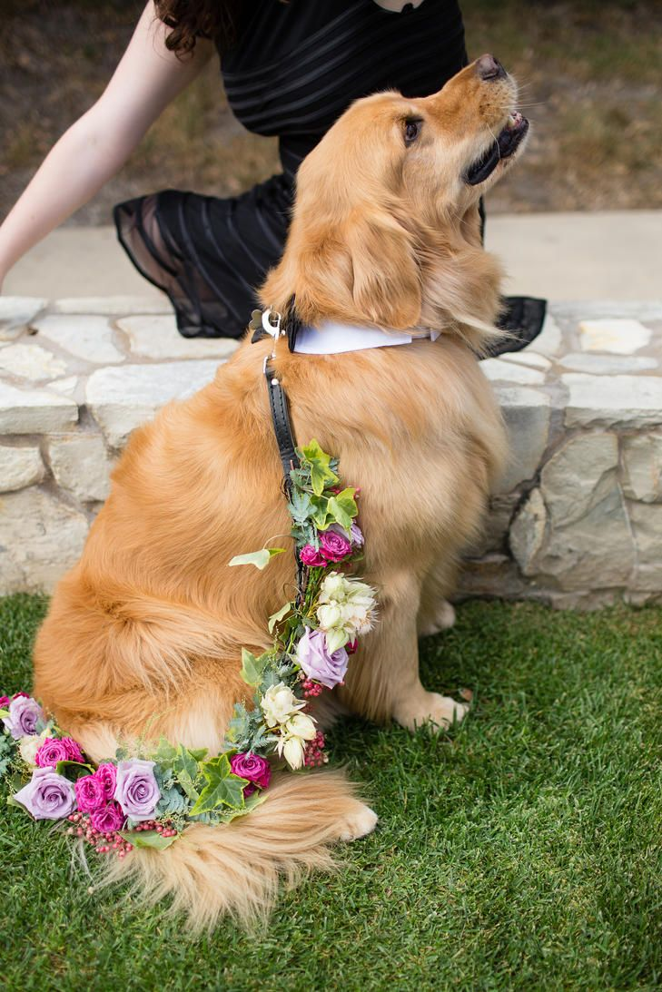 Family Dog as Ring Bearer