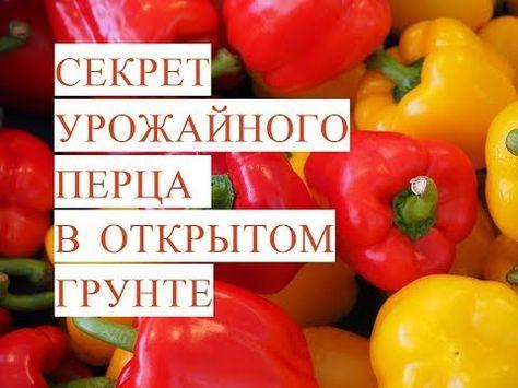 Перец. Выращивание сладкого перца - тема данного видео. Перец выращивание, перец уход - это то, о чем можно говорить очень долго: столько тонкостей, столько ...