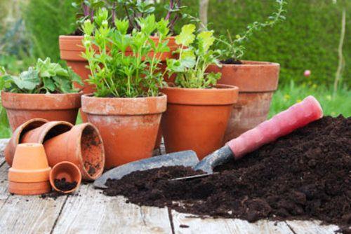 Gemüsebeet auf der Terrasse anlegen – 5 Möglichkeiten vorgestellt