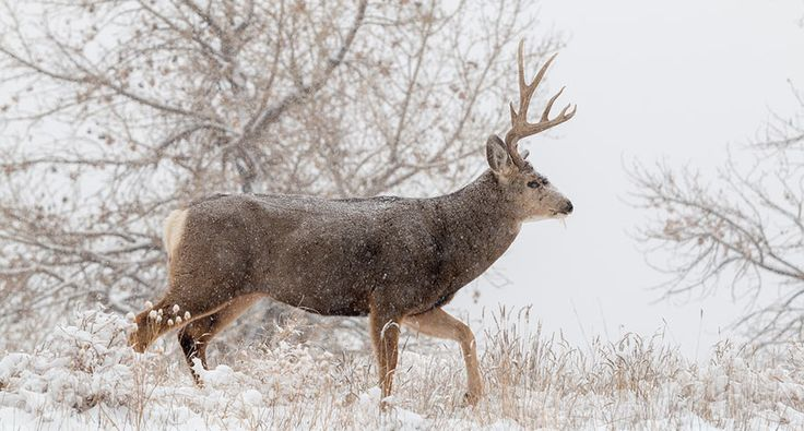A deer hunter's Christmas will remind you to appreciate the outdoors.