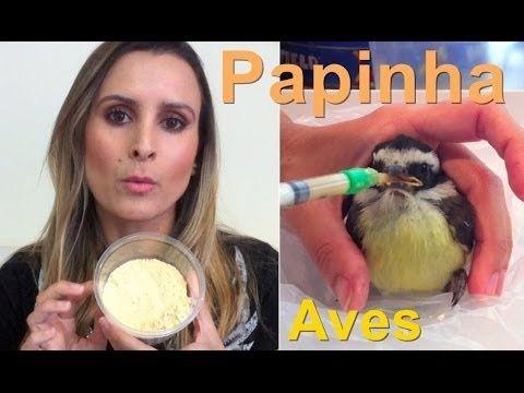 Como dar papinha para aves | Calopsita - YouTube