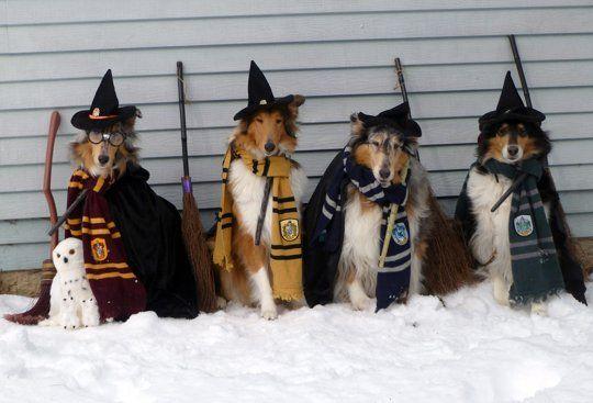 30 Amazing Pet Halloween Costume Ideas
