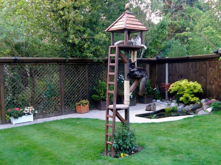 44 Best Images About Cat Proof Gardens Fencing