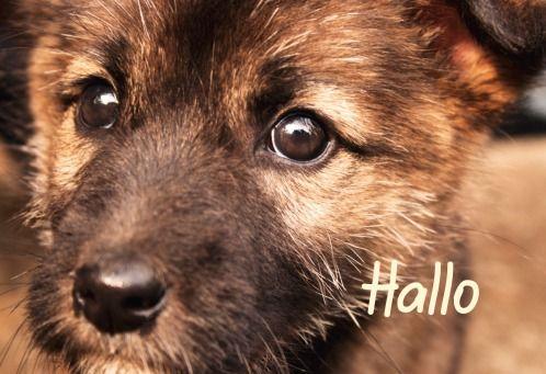 Hallo, Cute Dog   @FairMail - Fair Trade Cards  - FDP6417