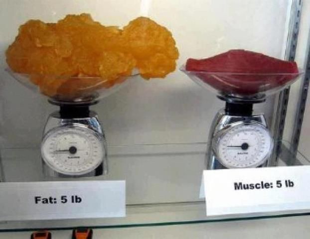 """This is what they mean by """"muscle weighs more than fat,"""" for those of you who don't understand that one pound of muscle is still ONE POUND. DUR"""