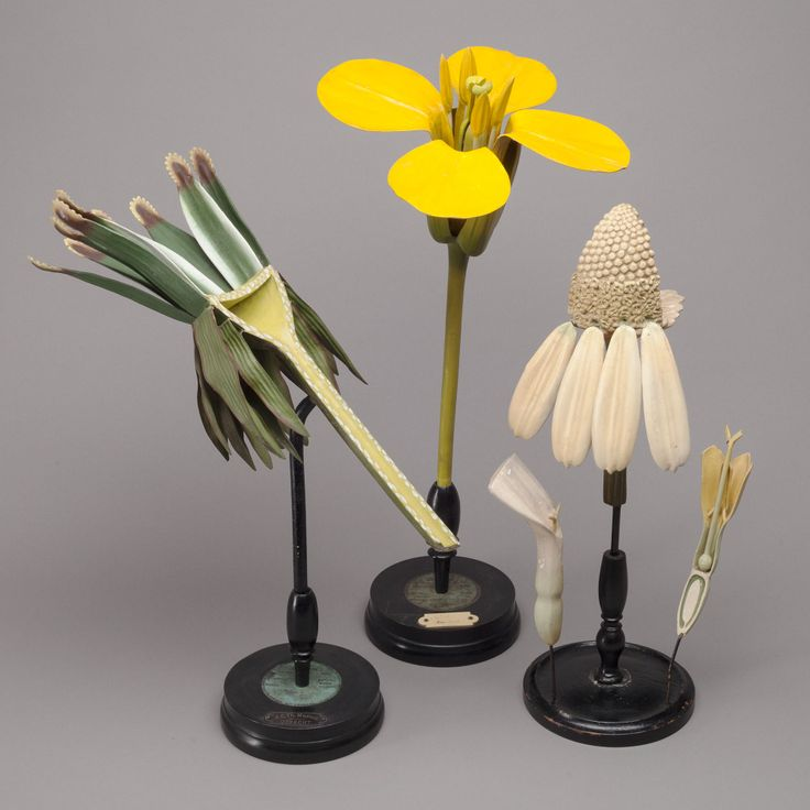 """II. Botanical Models (1800 - 1900) With paper labels """"A. Dall'Eco FIRENZE Viale Principe Eugenio 14-30"""" Hand painted papier maché, paper and wood on turned wood stands."""