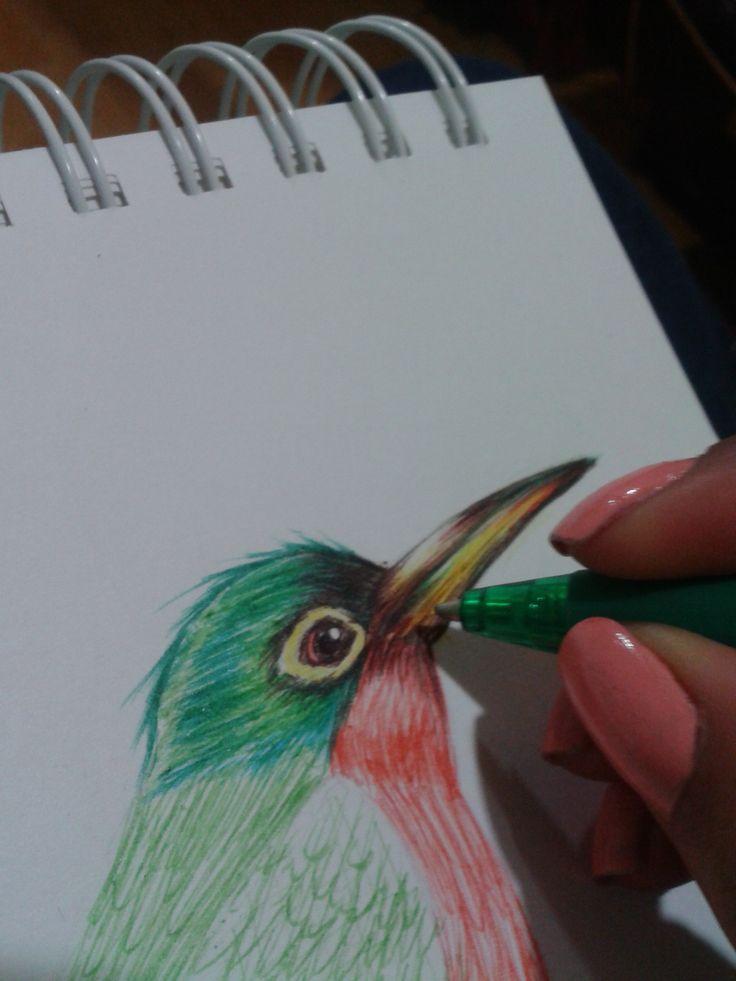 jacamar bird